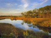Tim Fitzharris - Lake near Apalachicola, Florida
