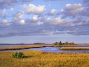 Tim Fitzharris - Saltwater marshes at Cedar Key, Florida