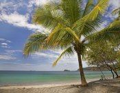 Tim Fitzharris - Palm trees line Penca Beach, Costa Rica