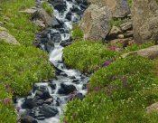 Tim Fitzharris - Porphyry Creek near Silverton, Colorado