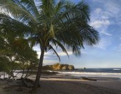 Tim Fitzharris - Palm trees line Pelada Beach, Costa Rica
