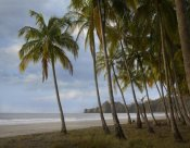 Tim Fitzharris - Palm trees line Carillo Beach, Costa Rica