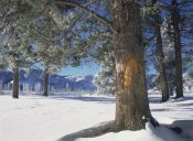 Tim Fitzharris - Winter in Yellowstone National Park, Wyoming