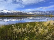 Tim Fitzharris - Carson Range reflected in Washoe Lake, Nevada