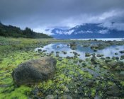 Tim Fitzharris - Low tide revealing algae covered rocks, Alaska