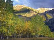 Tim Fitzharris - Quaking Aspen trees and Highland Peak, Colorado