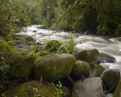 Tim Fitzharris - Mindo River flowing through cloud forest, Ecuador
