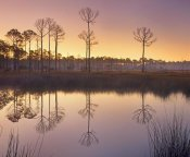 Tim Fitzharris - Pineland at Piney Point near Hagen's Cove, Florida
