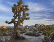 Tim Fitzharris - Joshua Tree, Joshua Tree National Park, California