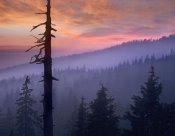 Tim Fitzharris - Sunset over forest, Crater Lake National Park, Oregon