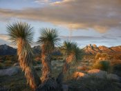 Tim Fitzharris - Yucca and Organ Mountains near Las Cruces, New Mexico