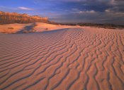Tim Fitzharris - Gypsum dunes, Guadalupe Mountains National Park, Texas