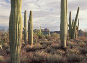 Tim Fitzharris - Safford Peak and Saguaro Saguaro National Park, Arizona