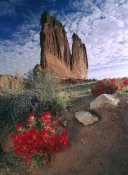 Tim Fitzharris - Paintbrush and the Organ Rock, Arches National Park, Utah