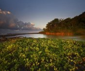 Tim Fitzharris - Lagoon near coastline, Corcovado National Park, Costa Rica
