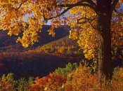 Tim Fitzharris - Autumn deciduous forest, Shenandoah National Park, Virginia