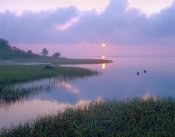 Tim Fitzharris - Marsh at sunrise over Eagle Bay, St Joseph Peninsula, Florida