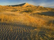 Tim Fitzharris - Kelso Dunes and grasses, Mojave National Preserve, California