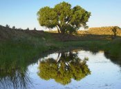 Tim Fitzharris - Tree reflecting in creek near Black Mesa State Park, Oklahoma