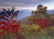 Tim Fitzharris - Staghorn Sumac in autumn, Blue Ridge Mountain Range, Virginia