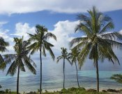 Tim Fitzharris - Coconut Palm trees, Bikini Beach, Panglao Island, Philippines
