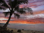 Tim Fitzharris - Coconut Palm at sunset near Dimiao, Bohol Island, Philippines