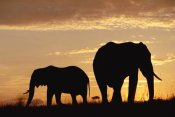 Tim Fitzharris - African Elephant mother and calf silhouetted at sunset, Kenya
