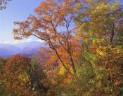 Tim Fitzharris - Great Smoky Mountains from, Blue Ridge Parkway, North Carolina