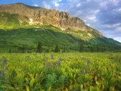 Tim Fitzharris - Gothic Mountain overlooking meadow near Crested Butte, Colorado