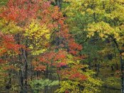 Tim Fitzharris - Fall foliage at Fishers Gap, Shenandoah National Park, Virginia