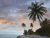 Tim Fitzharris - Coconut Palm trees, Pamilacan Island, Bohol Island, Philippines