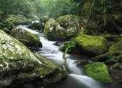 Tim Fitzharris - Roaring fork river, Great Smoky Mountains National Park, Tennessee