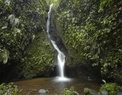 Tim Fitzharris - Waterfall in the Milpe Bird Sanctuary, Mindo Cloud Forest, Ecuador