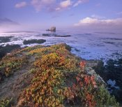 Tim Fitzharris - Iceplant covering coastal rocks, Point Piedras Blancas, California
