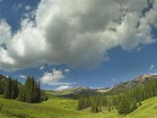 Tim Fitzharris - Stand of conifers in the Elk Mountains near Crested Butte, Colorado