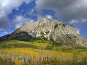 Tim Fitzharris - Marcellina Mountain and aspen forest in Raggeds Wilderness, Colorado