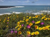 Tim Fitzharris - California Poppy and Iceplant, Montano de Oro State Park, California