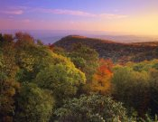 Tim Fitzharris - Blue Ridge Mountains with deciduous forests in autumn, North Carolina