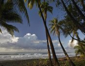 Tim Fitzharris - Palm trees on the beach near Marino Ballena National Park, Costa Rica