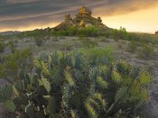Tim Fitzharris - Opuntia and hoodoos, Big Bend National Park, Chihuahuan Desert, Texas