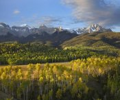 Tim Fitzharris - Quaking Aspen forest and Mount Sneffels, San Juan Mountains, Colorado