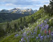 Tim Fitzharris - Wildflowers and Tatoosh Range, Mount Rainier National Park, Washington