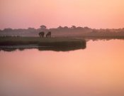 Tim Fitzharris - Wild Horse pair grazing, Assateague Island National Seashore, Maryland