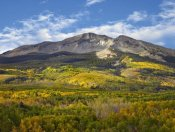 Tim Fitzharris - Aspen forest and East Beckwith Mountain, West Elk Wilderness, Colorado