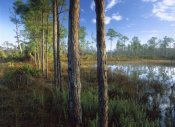 Tim Fitzharris - Pond near the Loxahatchee River, Jonathan Dickinson State Park, Florida