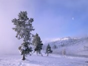 Tim Fitzharris - Snow-covered Pines with half moon in Yellowstone National Park, Wyoming