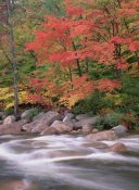 Tim Fitzharris - Autumn along Swift River, White Mountains National Forest, New Hampshire
