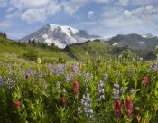 Tim Fitzharris - Paradise Meadow and Mount Rainier, Mount Rainier National Park, Washington