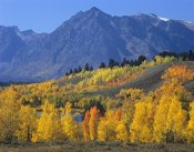 Tim Fitzharris - Ranger Peak and Aspen forest in autumn, Grand Teton National Park, Wyoming