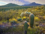 Tim Fitzharris - Ajo Mountains, Organ Pipe Cactus National Monument, Sonoran Desert, Arizona